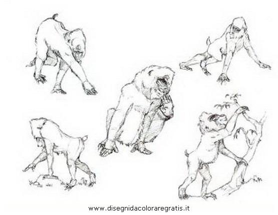 animali/scimmie/scimmia_mandrillo_8.JPG