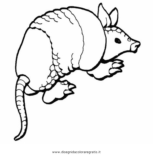 animali/serpenti/armadillo.JPG