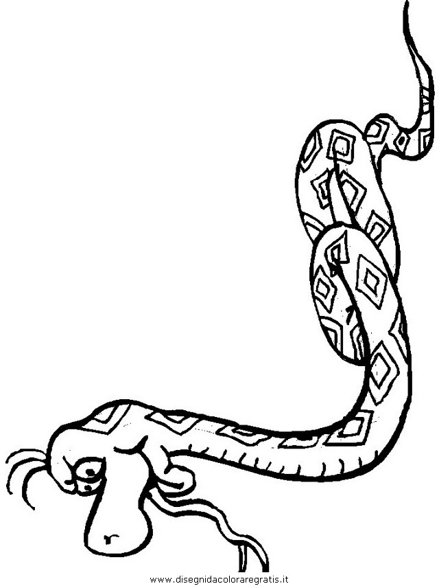 animali/serpenti/serpente_10.JPG
