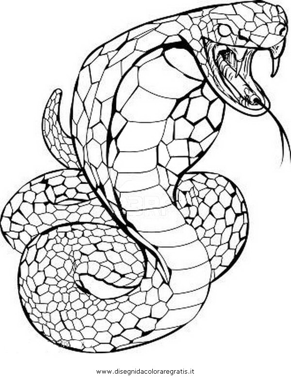 animali/serpenti/serpente_51.JPG