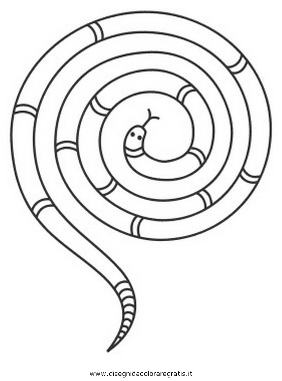 animali/serpenti/serpente_54.JPG