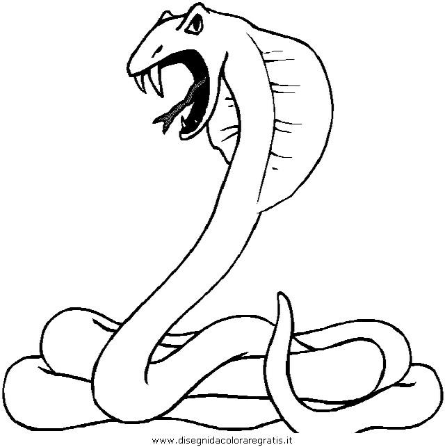 animali/serpenti/serpente_a3.JPG