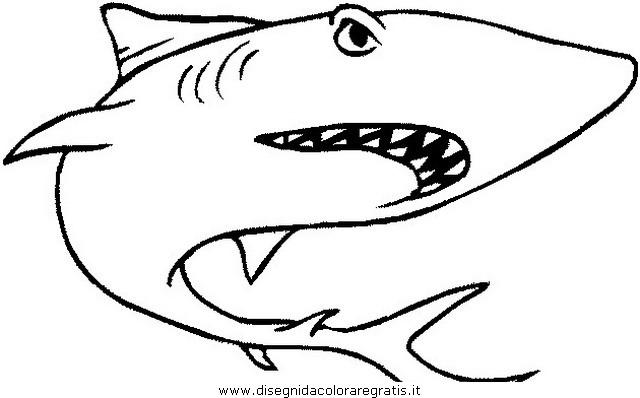 animali/squali/squalo_megalodonte_03.JPG