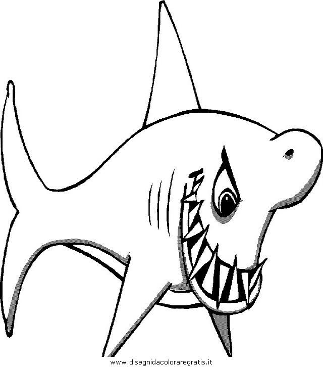 animali/squali/squalo_squali_01.JPG
