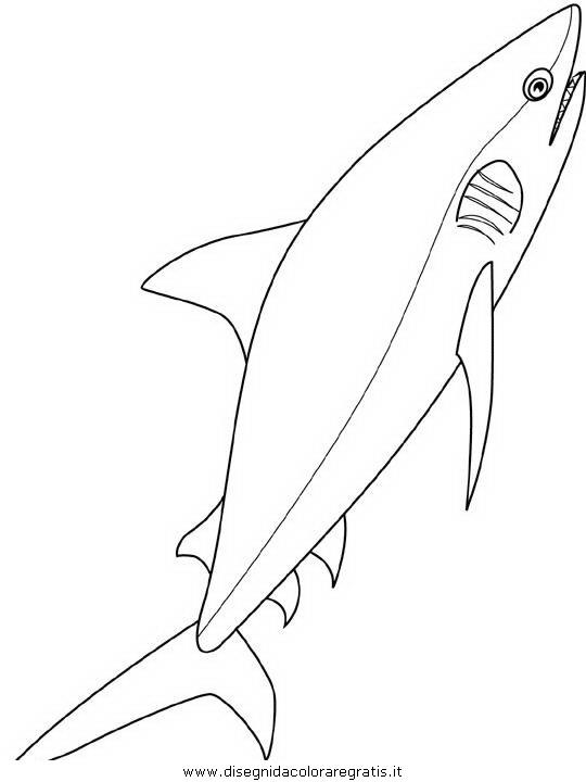 animali/squali/squalo_squali_04.JPG
