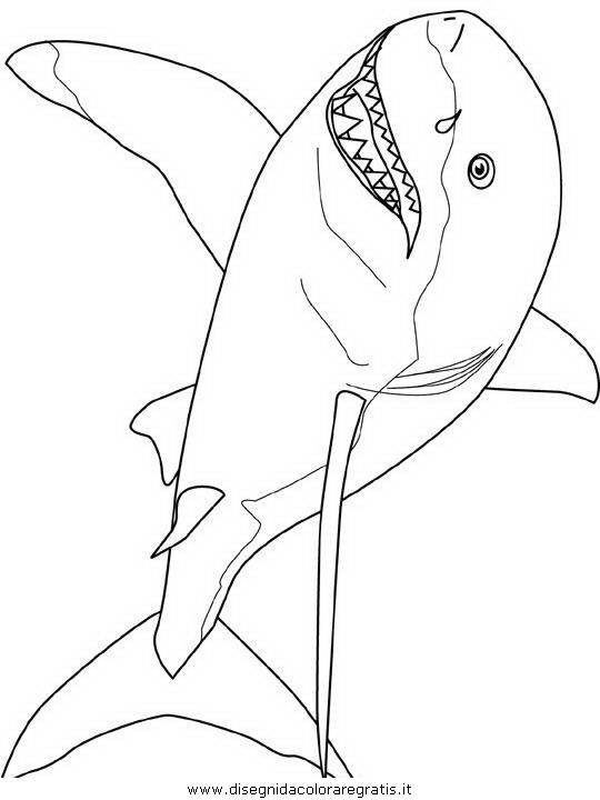 animali/squali/squalo_squali_05.JPG