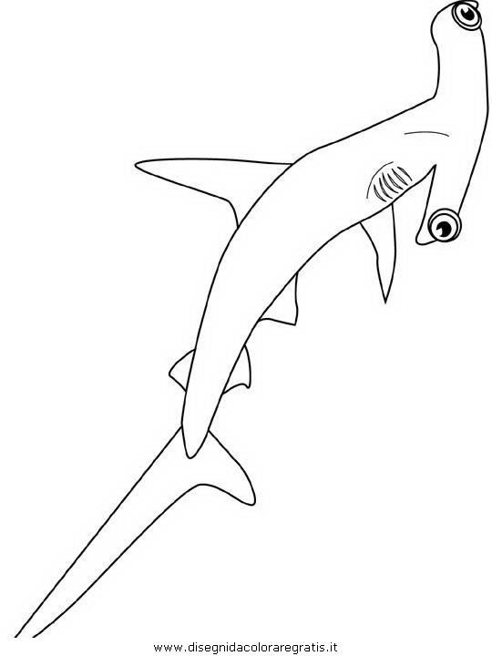 animali/squali/squalo_squali_06.JPG
