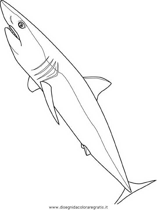 animali/squali/squalo_squali_07.JPG