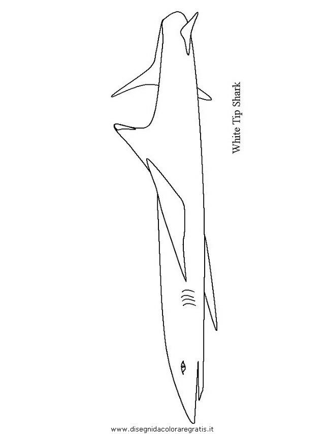 animali/squali/squalo_squali_08.JPG