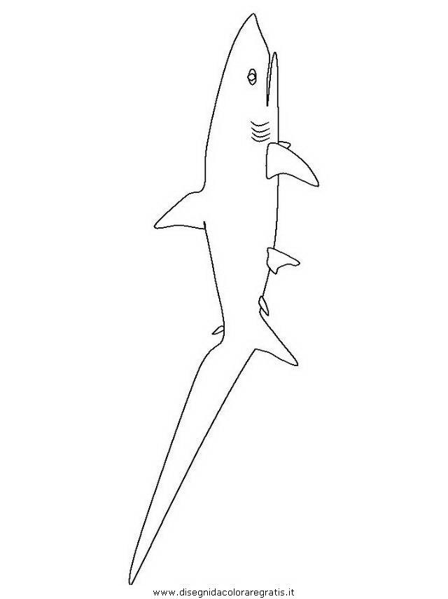 animali/squali/squalo_squali_10.JPG