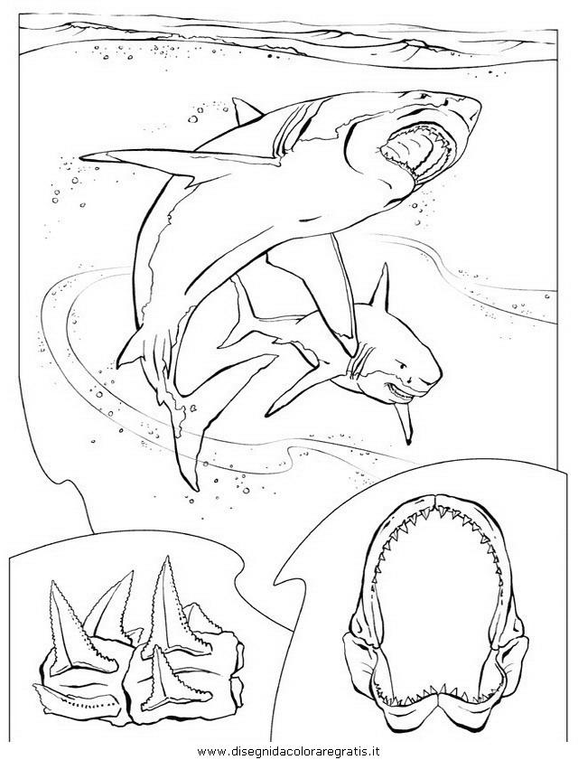 animali/squali/squalo_squali_11.JPG