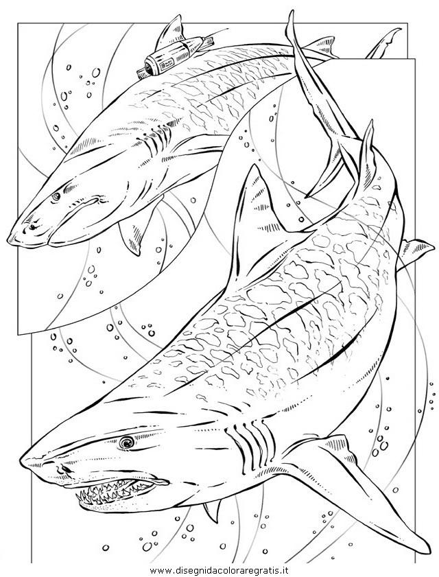 animali/squali/squalo_squali_33.JPG