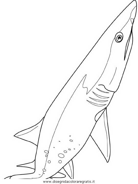 animali/squali/squalo_squali_35.JPG