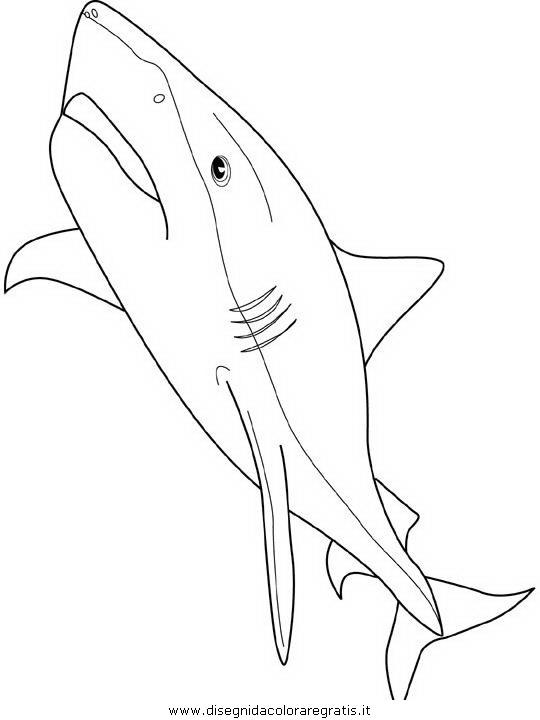 animali/squali/squalo_squali_37.JPG