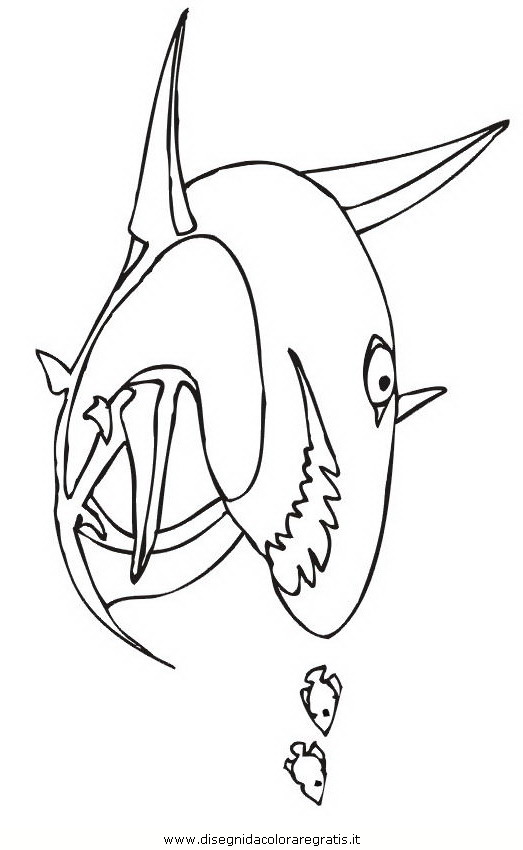 animali/squali/squalo_squali_45.jpg