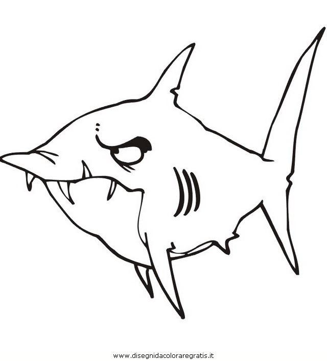 animali/squali/squalo_squali_49.jpg