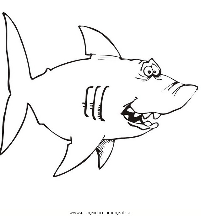 animali/squali/squalo_squali_52.jpg