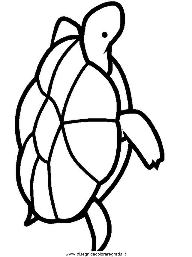 animali/tartarughe/tartaruga_14.JPG