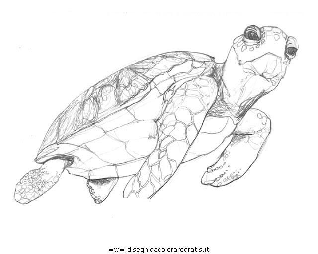 animali/tartarughe/tartaruga_33.JPG