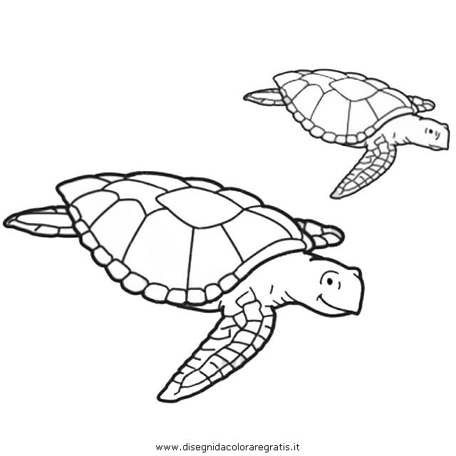 animali/tartarughe/tartaruga_34.JPG