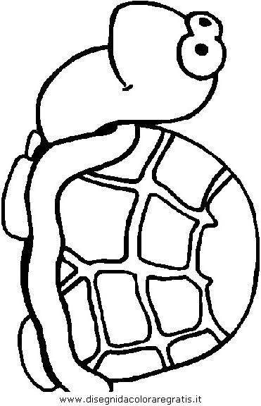 animali/tartarughe/tartaruga_41.JPG