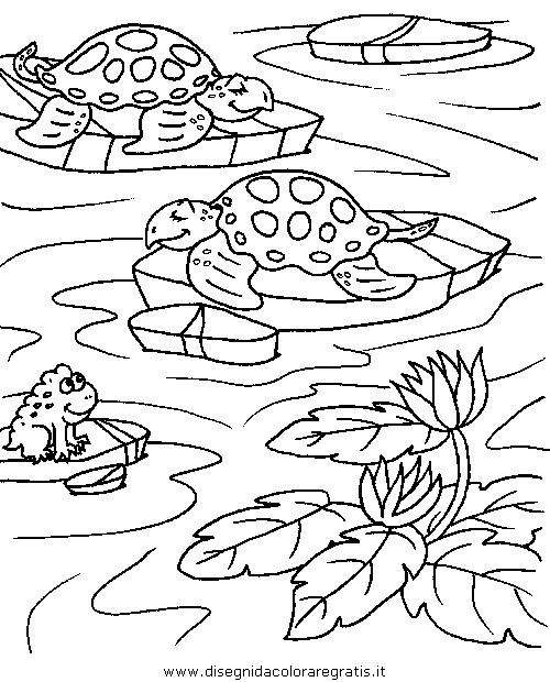 animali/tartarughe/tartaruga_44.JPG