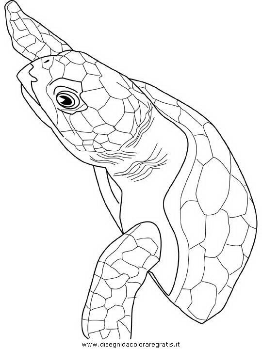 animali/tartarughe/tartaruga_tartarughe_01.JPG