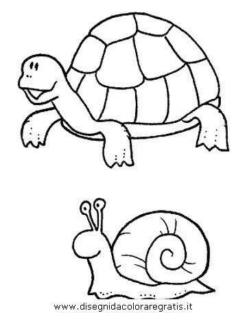 animali/tartarughe/tartaruga_tartarughe_04.JPG
