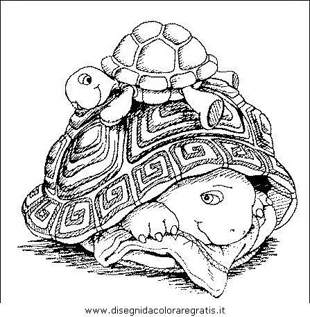 animali/tartarughe/tartaruga_tartarughe_07.JPG