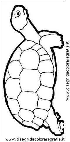 animali/tartarughe/tartaruga_tartarughe_09.JPG