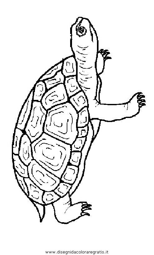 animali/tartarughe/tartaruga_tartarughe_16.JPG