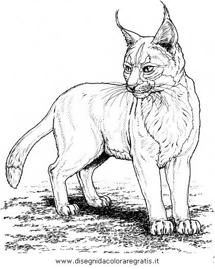 animali/tigri/lince_linci_11.JPG