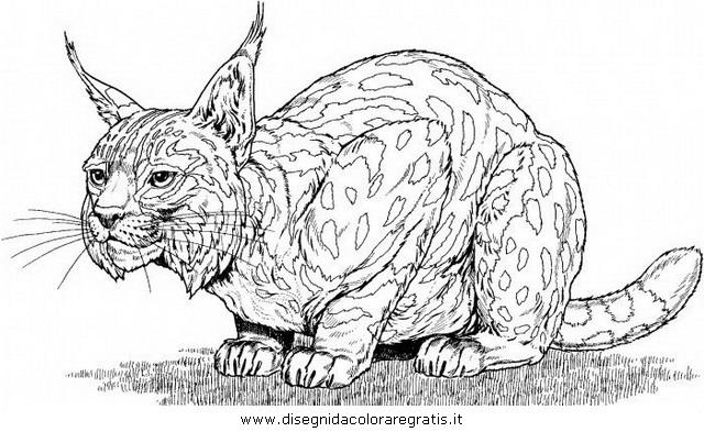 Disegno lince linci 12 animali da colorare for Immagini tigre da colorare