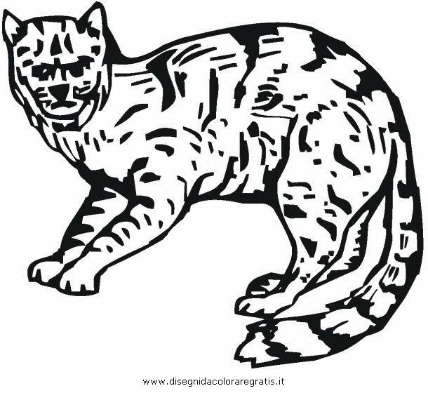 animali/tigri/lince_linci_13.JPG