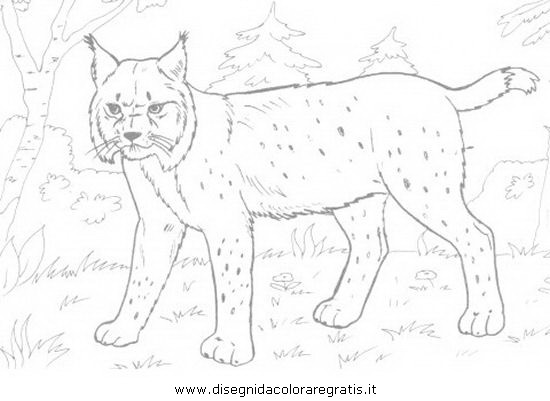 animali/tigri/lince_linci_15.JPG
