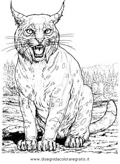 Disegno lince linci 16 animali da colorare for Immagini tigre da colorare
