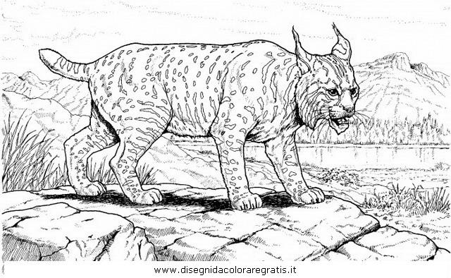 animali/tigri/lince_linci_17.JPG