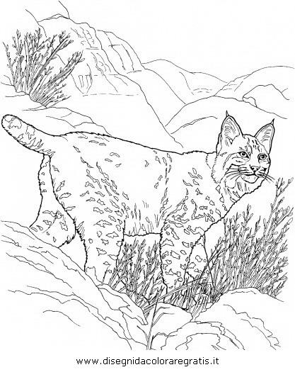 animali/tigri/lince_linci_19.JPG