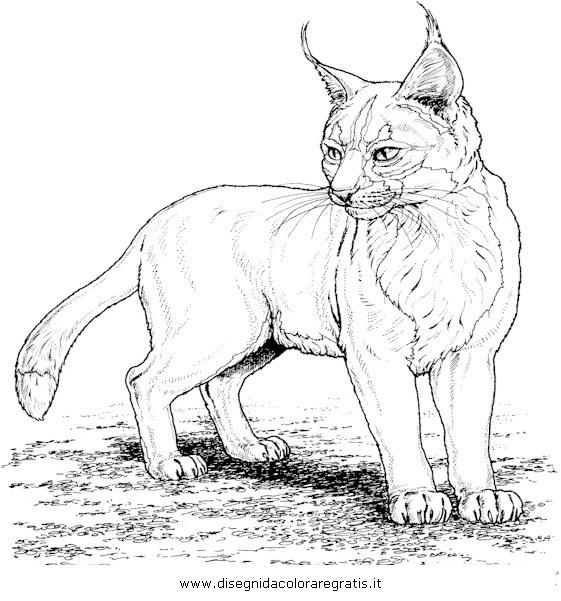 animali/tigri/lince_linci_20.JPG