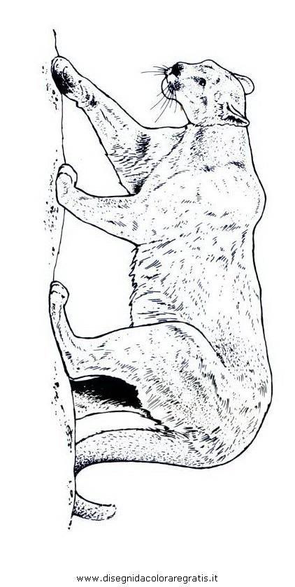 animali/tigri/puma_03.JPG