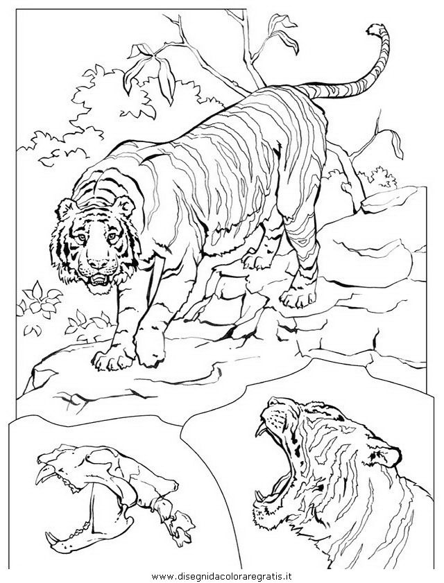 animali/tigri/tigre_04.JPG