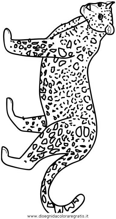 animali/tigri/tigre_06.JPG