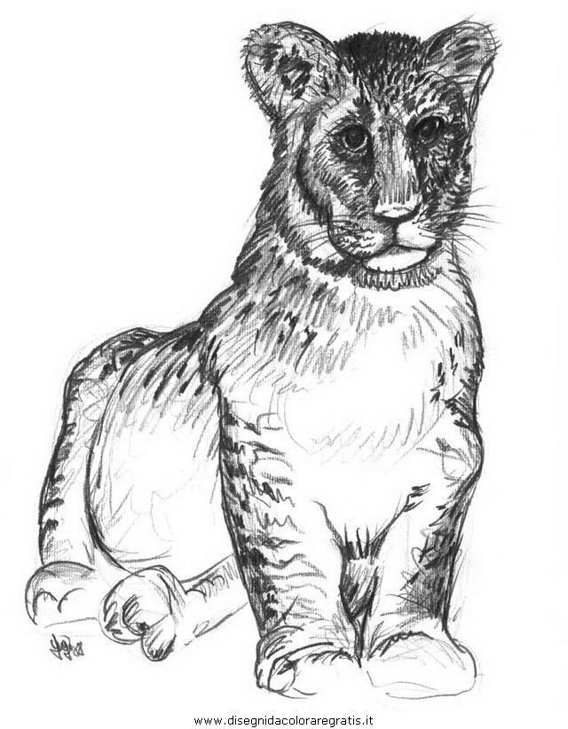 animali/tigri/tigre_12.JPG