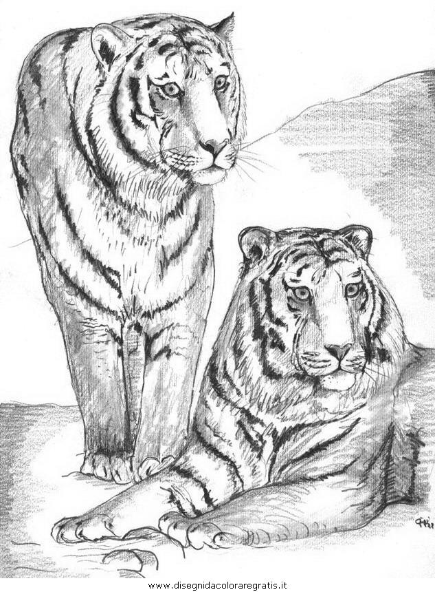 animali/tigri/tigre_13.JPG