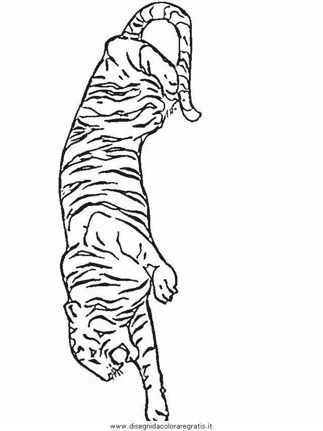 animali/tigri/tigre_28.JPG