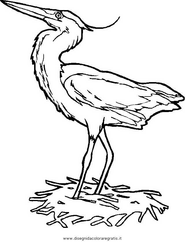 animali/uccelli/airone_aironi.JPG