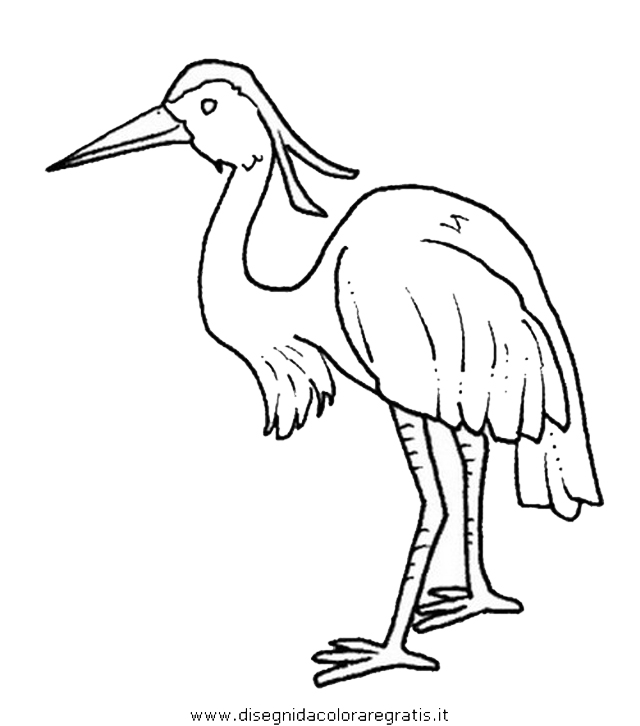 animali/uccelli/airone_aironi_02.JPG