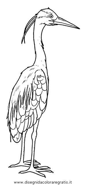 animali/uccelli/airone_cinerino_aironi.JPG