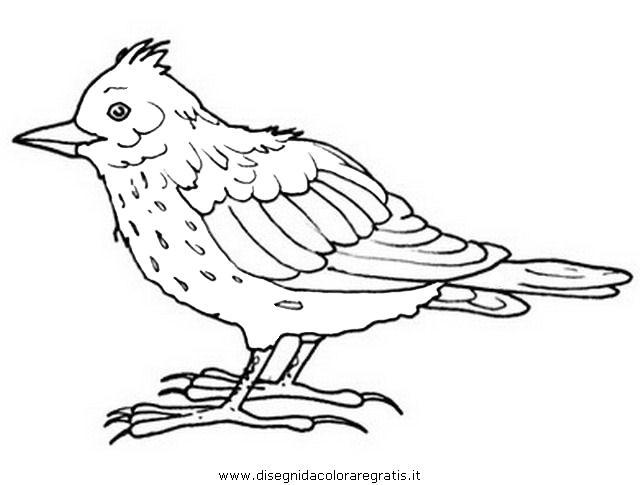 animali/uccelli/allodola.JPG