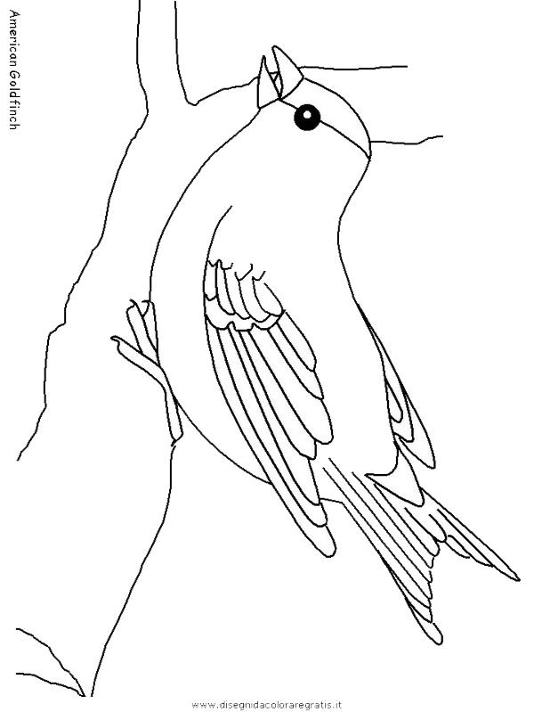 animali/uccelli/americangoldfinch.JPG